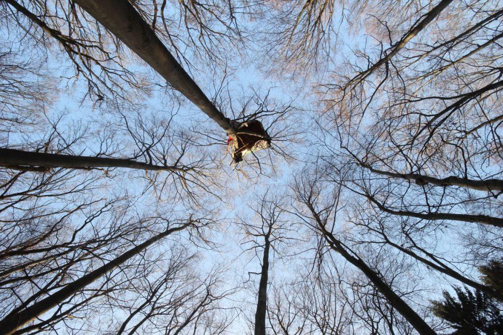 La Forêt de Hambach